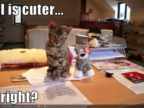 Satsugai cat 39 s blog just another weblog - Funny animal pictures with words ...